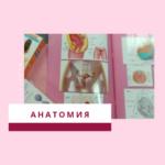 Женская интимная анатомия - общий обзор