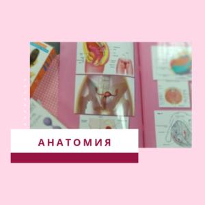 Анатомия женской интимной зоны