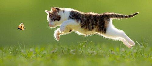 Кошка - идеалььный баланс между сокращением и расслаблением